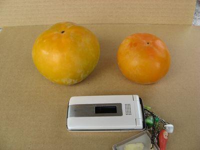太秋柿(8L)と富有柿(2L)