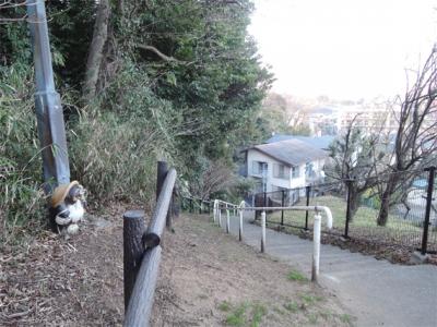 戸塚公園のタヌキ
