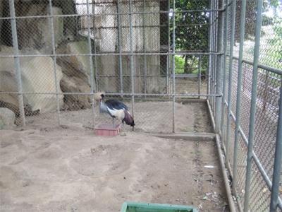 永明寺の鳥