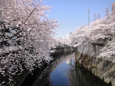 江戸川公園 桜2