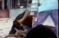 ワニに頭を噛まれてしまったハプニング映像
