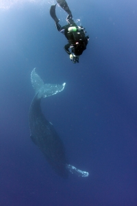 ザトウクジラ ムービー撮影