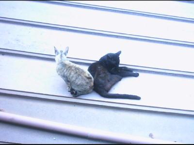 猫二匹の写真