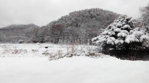 11月の寒波で15cm雪 の巻