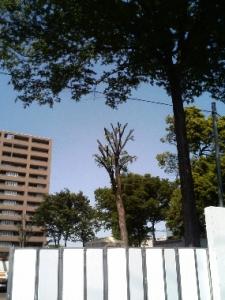 ととろの木1