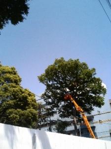ととろの木2
