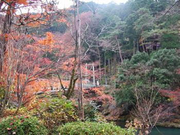 秋川を囲む紅葉_澤乃井