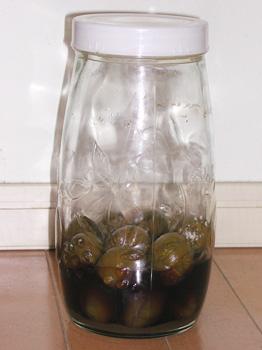 わが家の黒糖梅酒2008