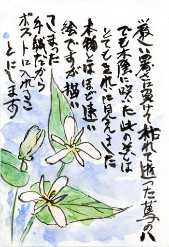母の絵手紙_葛の花