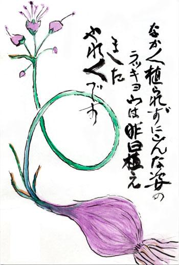 母の絵手紙_らっきょうの花