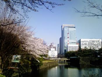 お濠を囲む桜スポット