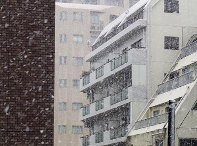 東京も吹雪いてます