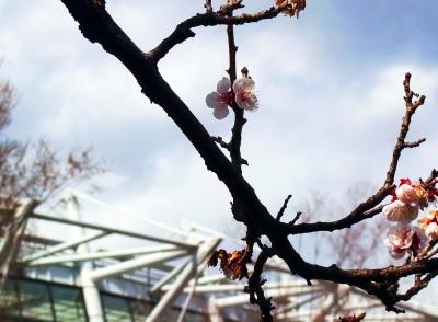 梅が咲き散っていくのも気づかなかった自分に気づく小春日和