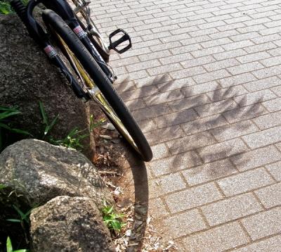 金環日食_東京7:40太陽はまるでエタニティー・リングだけど木漏れ日は二重映しのぼけぼけ