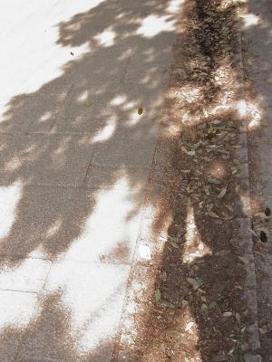 金環日食_東京8:21でた!!三日月型の木漏れ日だぁ