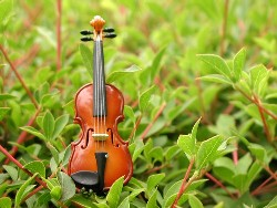 癒しのヴァイオリン・ヴィオラ・チェロ・弦楽四重奏