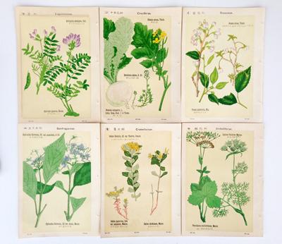 日本、植物図鑑、戦前、版画、ボタニカルアート