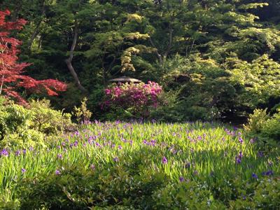 根津美術館、尾形光琳、庭園、燕子花