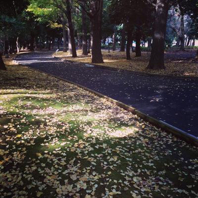 世田谷公園、紅葉、落ち葉、秋
