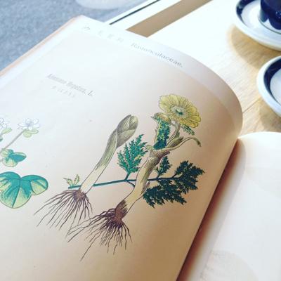 ボタニカルアート、植物図鑑、明治時代、牧野富太郎、アンティーク
