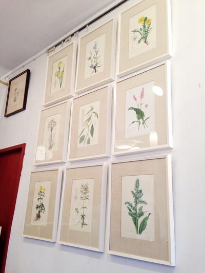 ボタニカルアート、フレーム、ウォールデコール、ヴィンテージ、ドイツ、ヨーロッパ、植物図譜、インテリアデコール