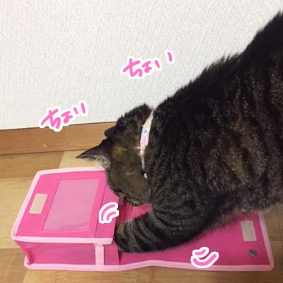ちま猫通信