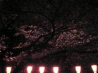 夜桜2007「上野恩賜公園」2