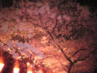 夜桜2007「上野恩賜公園」5