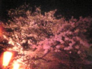 夜桜2007「上野恩賜公園」6