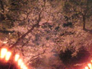 夜桜2007「上野恩賜公園」9