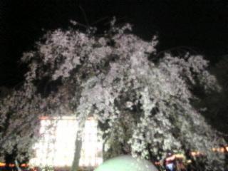 夜桜2007「上野恩賜公園」10