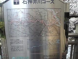 20070401_石神井川散歩コース