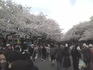20070331_上野公園1