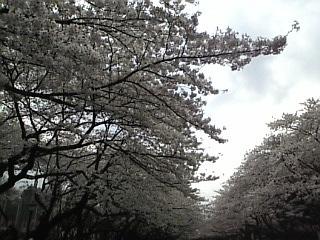 20070331_上野公園2