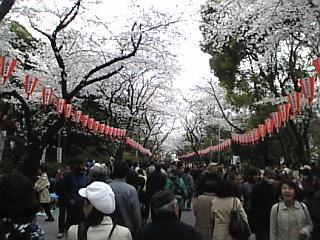 20070331_上野公園5