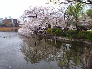 20070331_不忍の池4