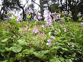 旧岩崎邸庭園「庭園の花1」