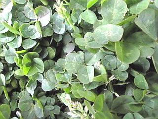 旧岩崎邸庭園「庭園の草花」