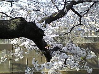 板橋_石神井川_花見2008_D