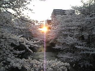 板橋_石神井川_花見2008_H
