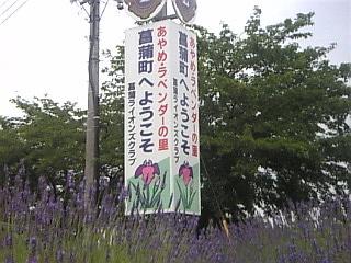 1_埼玉県菖蒲町ラベンダー.jpg