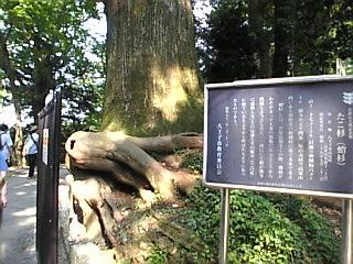 高尾山口「たこ」