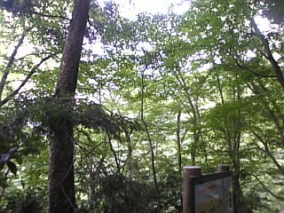 高尾山口「森林浴」