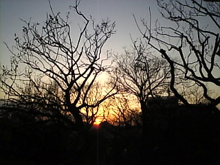 羽根木公園 せたがや梅まつり「夕焼け」