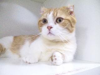 CAT MAGIC「猫3」