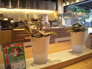 Soup Stock Tokyo お茶の水「店内」