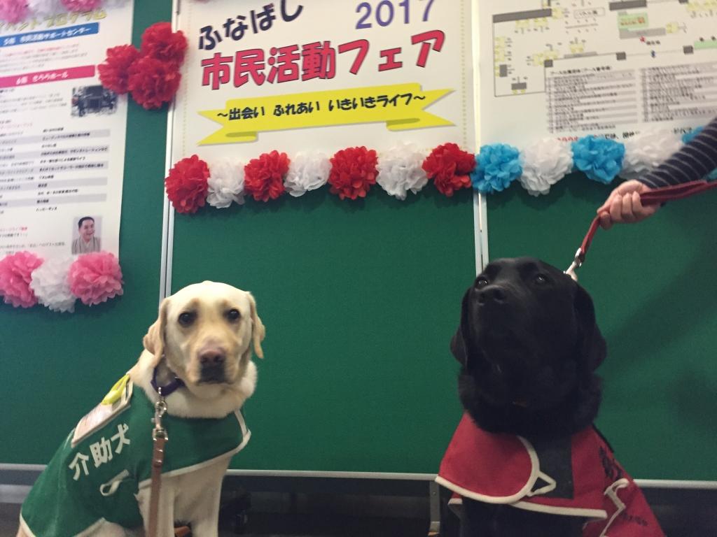 看板とPR犬