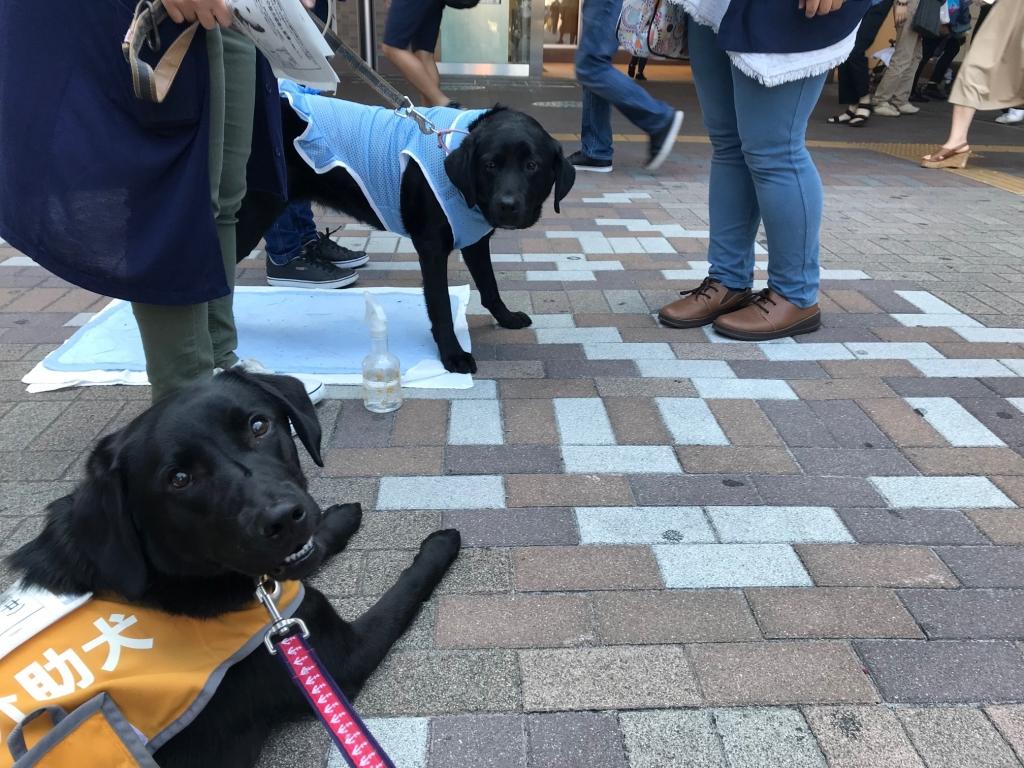 船橋募金 訓練犬ベルとウィルマ