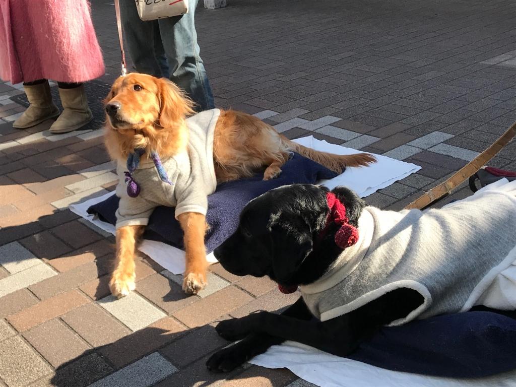 少しの日向を求める犬達 船橋募金