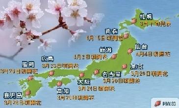 07年さくら、桜、サクラ開花、花見情報